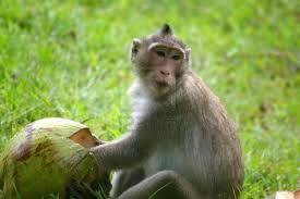 aap laat niet los