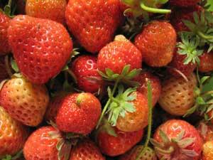 Goddelijke aardbeien
