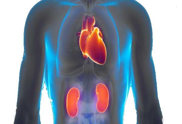 Zegenen van nieren en het hart voor genezing